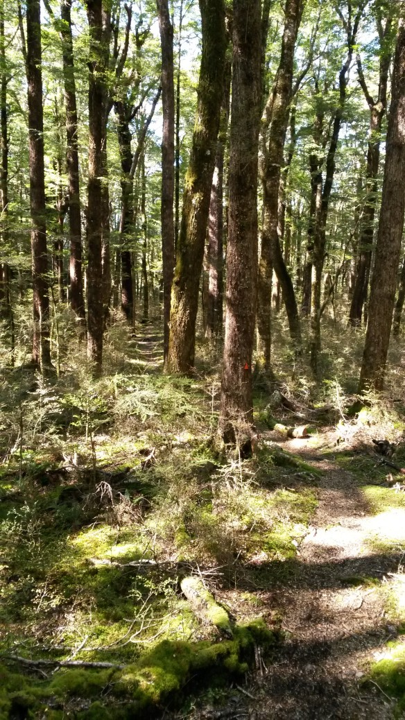 "Now, if my ""bush bash"" had been through open woods like these, I wouldn't have had anything to complain about. It's amazing how much sun actually comes through in the beech forest."