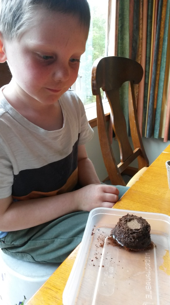 Sure enough, he did know how to soak the coir (coconut fibre) and scoop it sloppily into the paper pot, covering the tissue paper impregnated with basil seeds carefully with a thin layer of tissue paper.  Hurray for school.