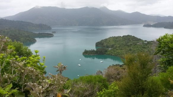 The Queen Charlotte track is open to bikers and walkers, and while I've not been able to do any running or hiking lately, I have been on a friend's mountain bike. The view from one of the look-outs reminds me of the Adirondacks, except with tree ferns and tides.