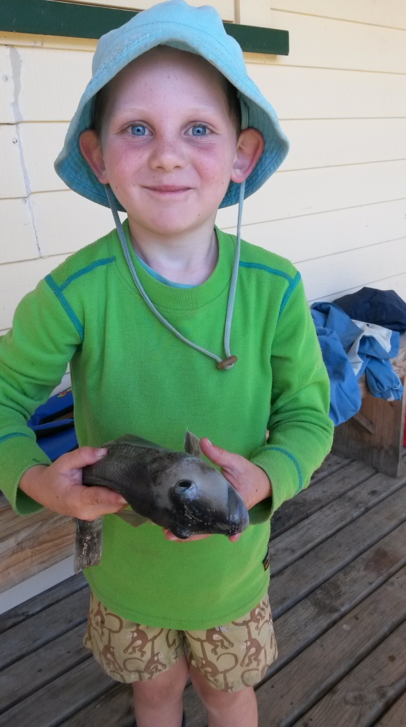There is a proud fisherboy!  Jeremiah pulled two blue cod out of the bay whose stomachs were full of perfect miniature paua, which I gleefully kept for future adornments.